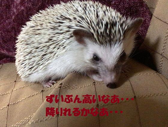 f:id:ogihara0308:20170623015726p:plain