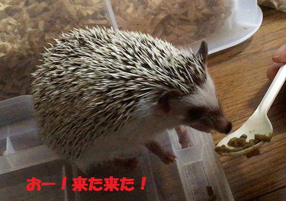 f:id:ogihara0308:20170628013003p:plain