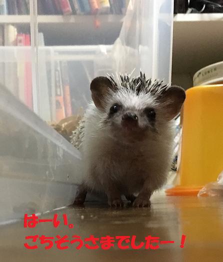 f:id:ogihara0308:20170628014108p:plain