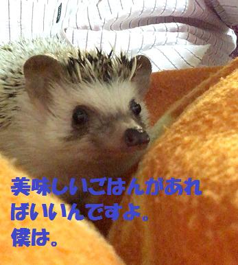 f:id:ogihara0308:20170701020543p:plain
