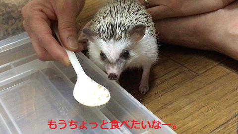 f:id:ogihara0308:20170705012356p:plain