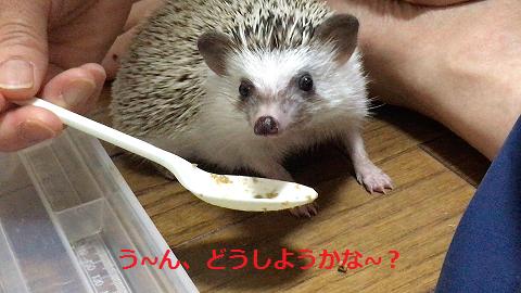 f:id:ogihara0308:20170705012513p:plain