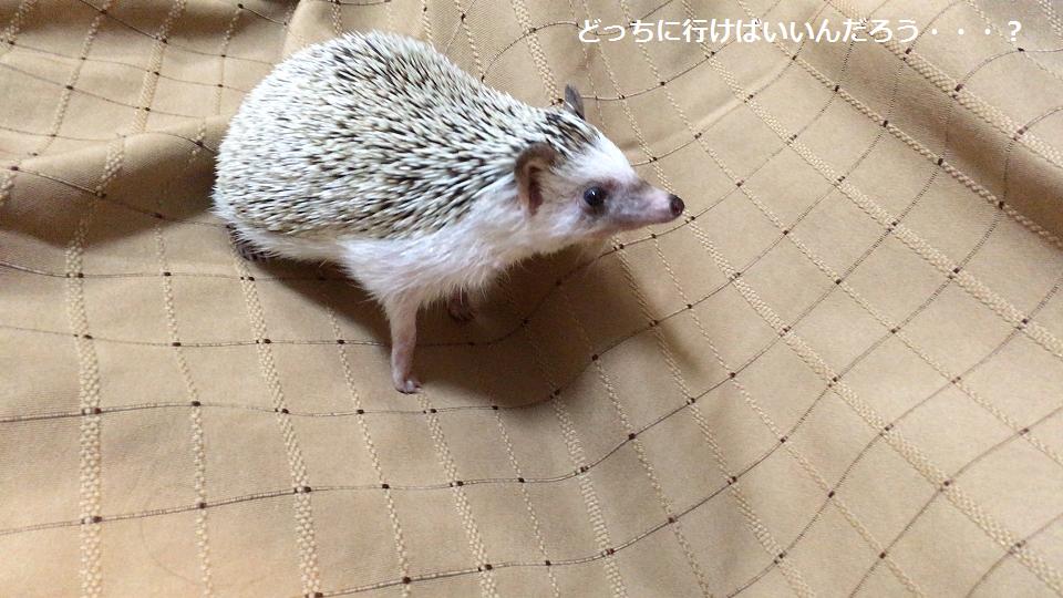 f:id:ogihara0308:20170709021217p:plain