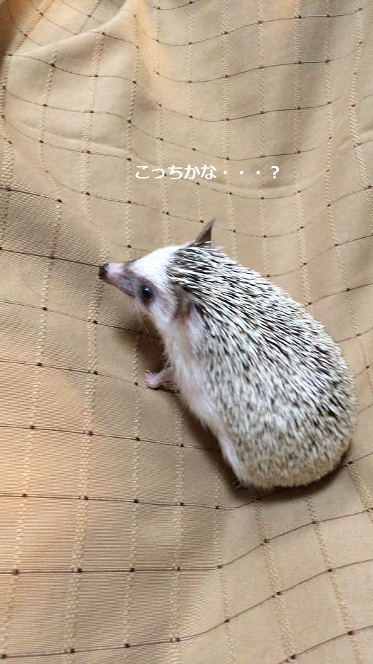 f:id:ogihara0308:20170709021239p:plain
