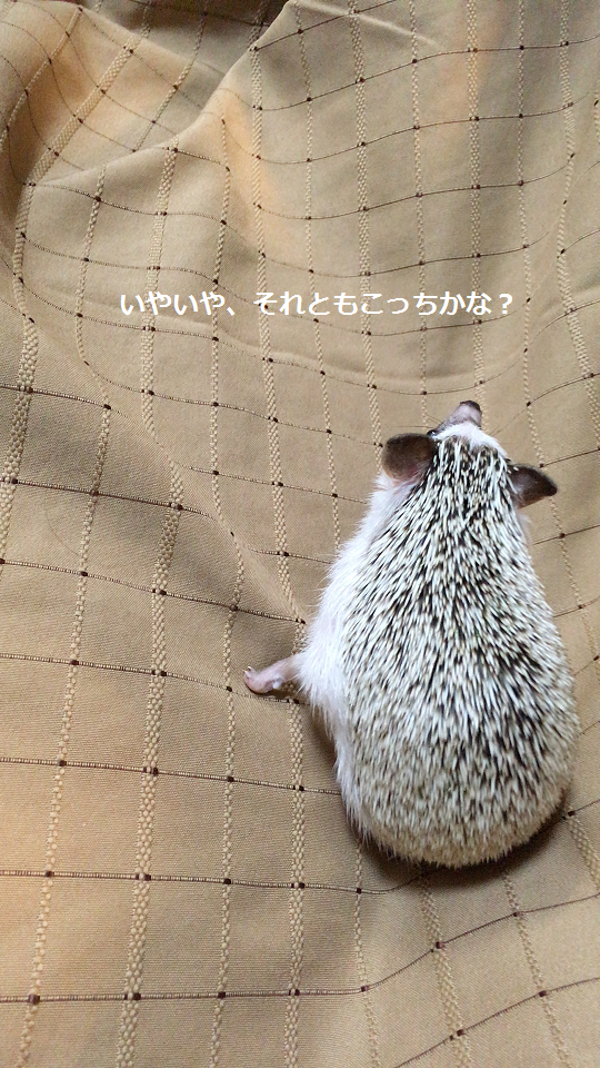 f:id:ogihara0308:20170709021259p:plain