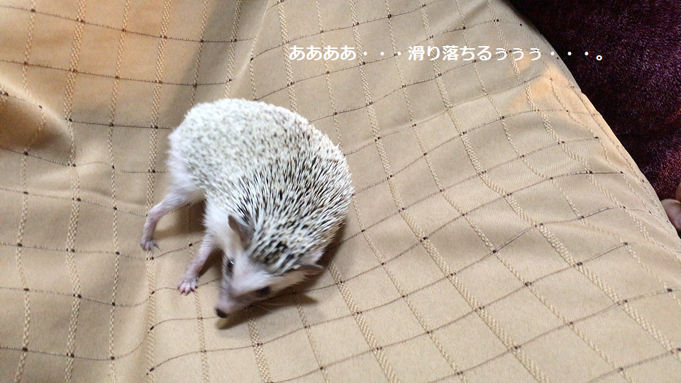 f:id:ogihara0308:20170709021339p:plain