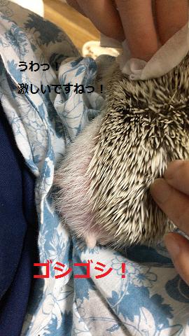 f:id:ogihara0308:20170709022245p:plain