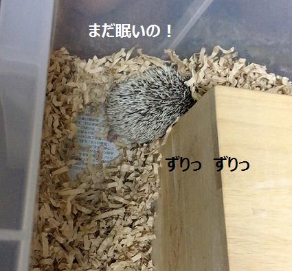 f:id:ogihara0308:20170713024331p:plain