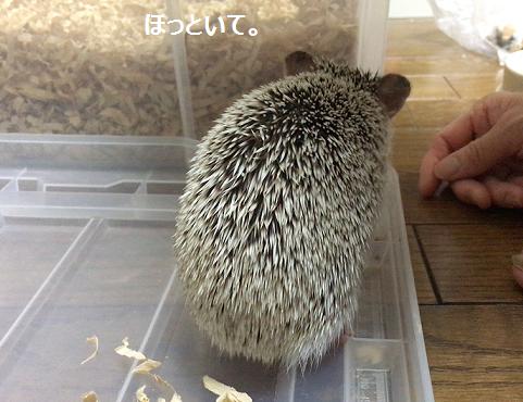 f:id:ogihara0308:20170802030140p:plain
