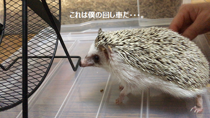 f:id:ogihara0308:20170802030946p:plain