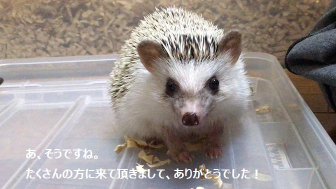 f:id:ogihara0308:20170807014735p:plain