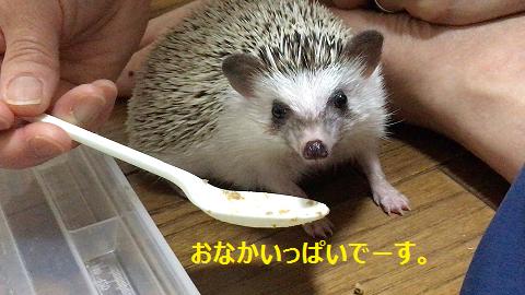 f:id:ogihara0308:20170812180228p:plain