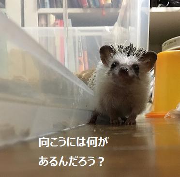 f:id:ogihara0308:20170812180248p:plain