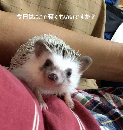 f:id:ogihara0308:20170812180652p:plain