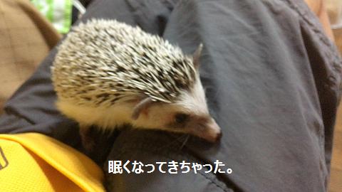 f:id:ogihara0308:20170822031158p:plain
