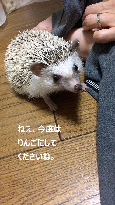 f:id:ogihara0308:20170905015822p:plain