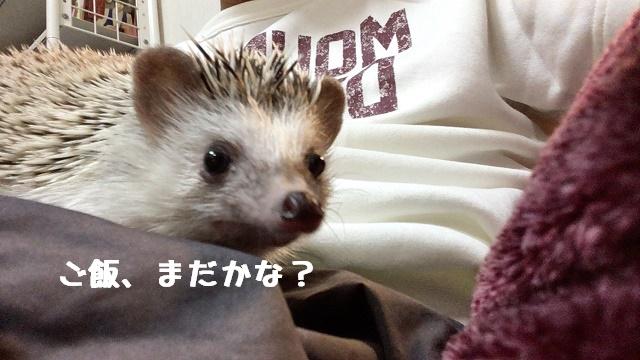 f:id:ogihara0308:20170913030618j:plain
