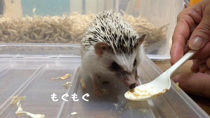 f:id:ogihara0308:20170913030651j:plain
