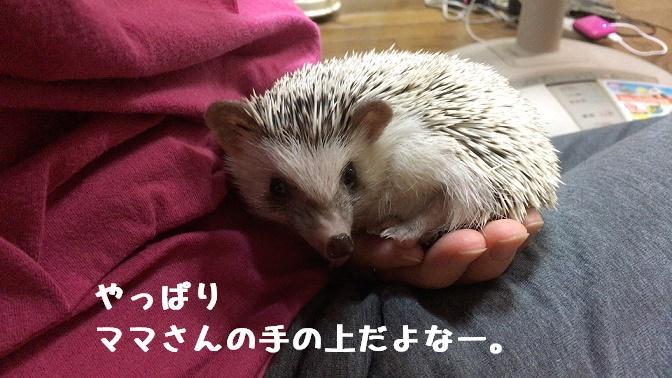 f:id:ogihara0308:20170913030827j:plain