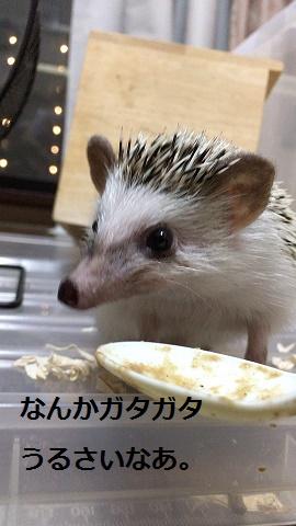f:id:ogihara0308:20171005013258j:plain