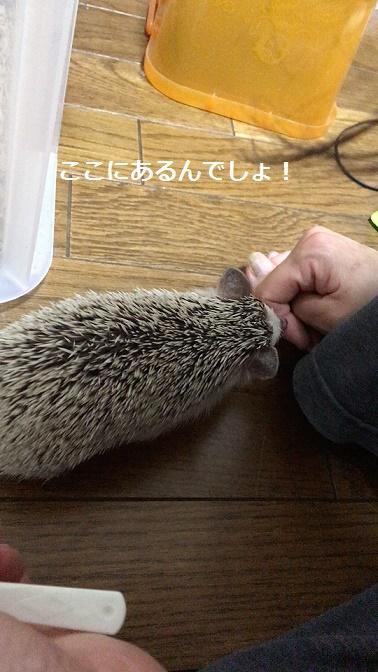 f:id:ogihara0308:20171013023952j:plain
