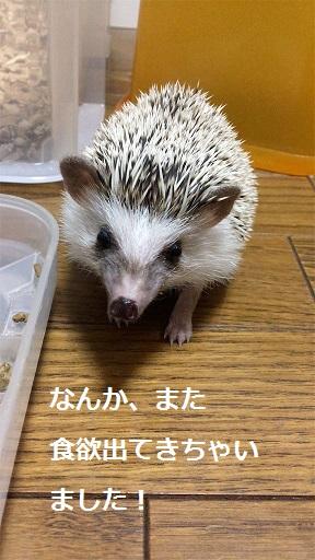 f:id:ogihara0308:20171022105259j:plain