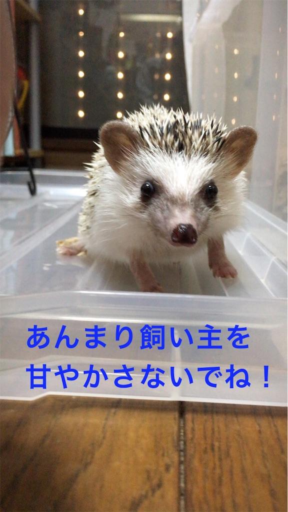 f:id:ogihara0308:20171024233648j:image