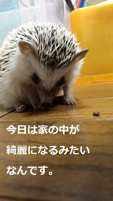 f:id:ogihara0308:20171121013048j:plain