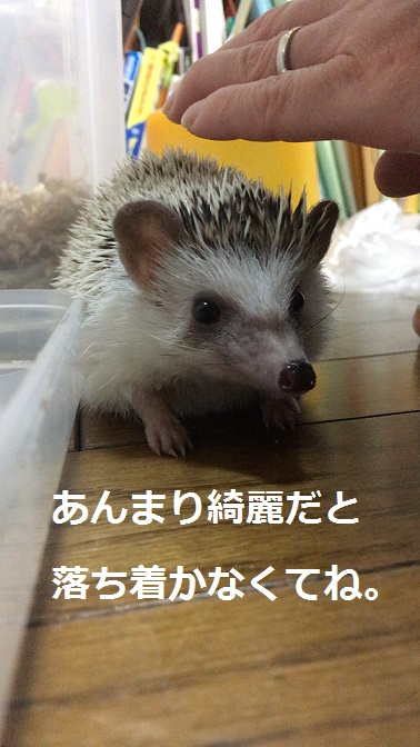 f:id:ogihara0308:20171121014248j:plain