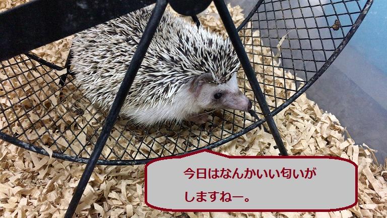 f:id:ogihara0308:20171209023418j:plain