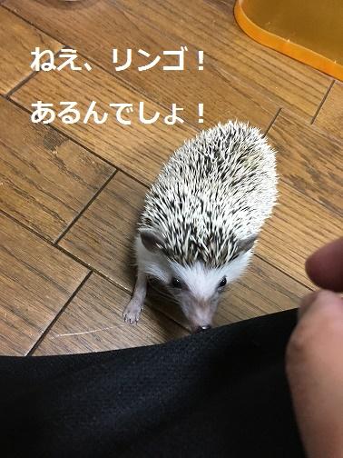 f:id:ogihara0308:20171209023857j:plain