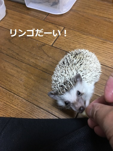 f:id:ogihara0308:20171209023932j:plain