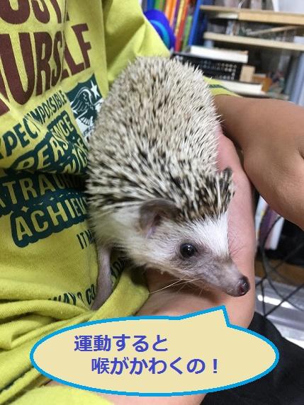 f:id:ogihara0308:20171221015947j:plain