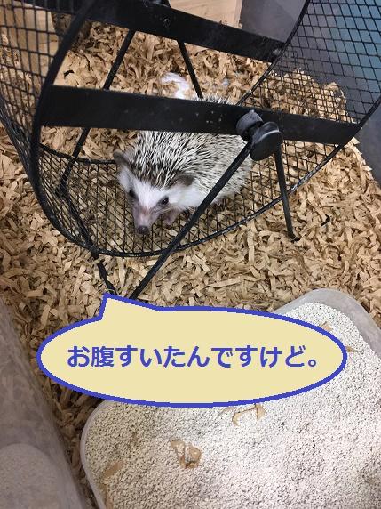 f:id:ogihara0308:20171225014906j:plain