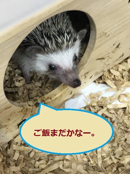 f:id:ogihara0308:20171228015631j:plain