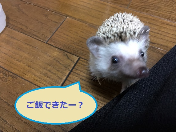 f:id:ogihara0308:20171228015717j:plain