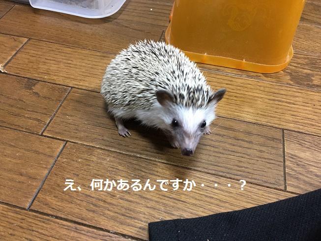 f:id:ogihara0308:20171231023206j:plain