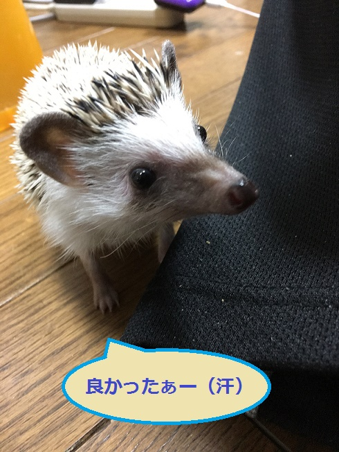 f:id:ogihara0308:20171231023539j:plain