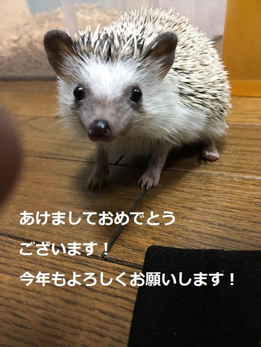 f:id:ogihara0308:20180107001343j:plain