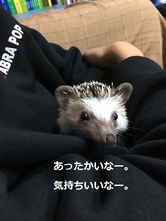 f:id:ogihara0308:20180111013004j:plain