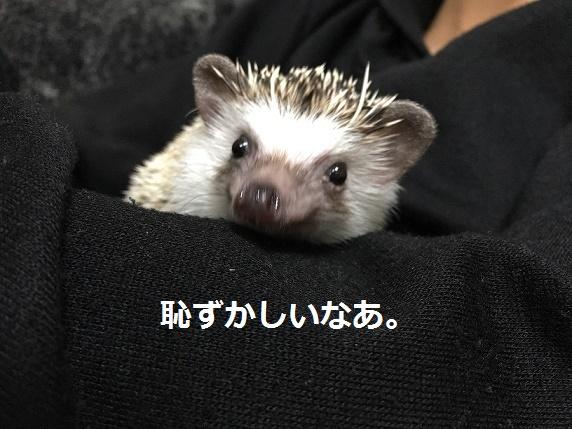 f:id:ogihara0308:20180118020151j:plain
