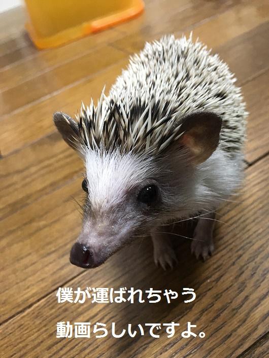 f:id:ogihara0308:20180210022115j:plain
