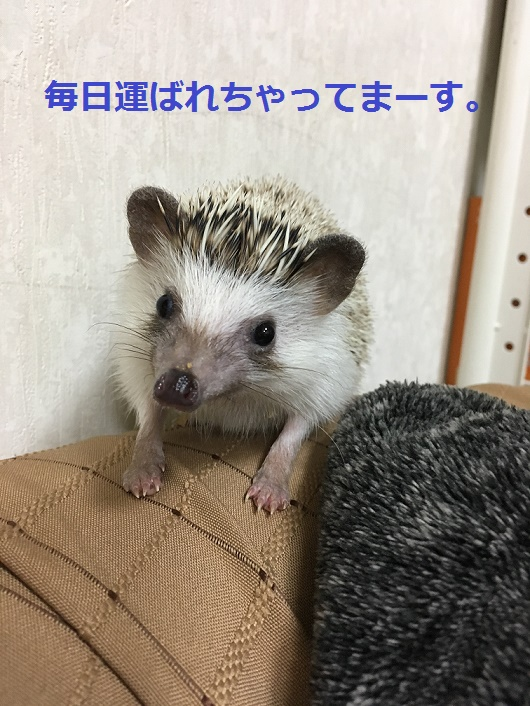 f:id:ogihara0308:20180210023017j:plain