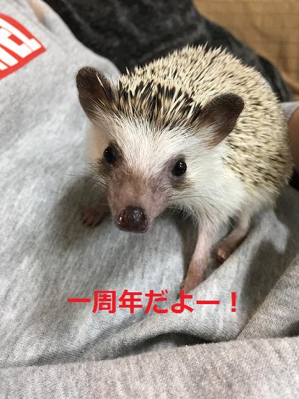 f:id:ogihara0308:20180227014549p:plain