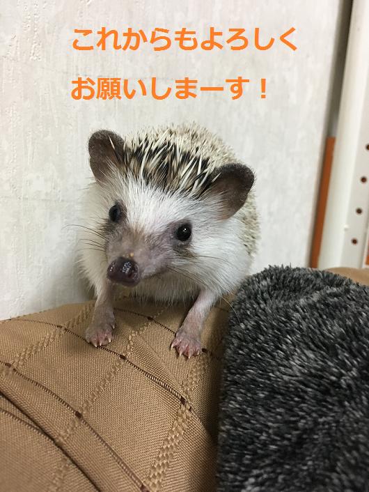 f:id:ogihara0308:20180227020440p:plain