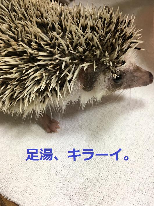 f:id:ogihara0308:20180323010537p:plain