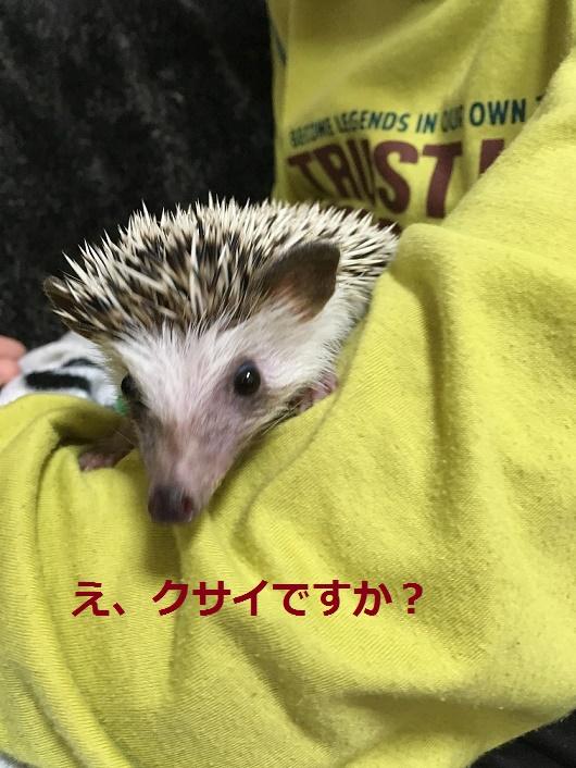 f:id:ogihara0308:20180323011537j:plain