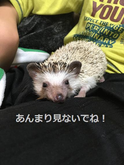 f:id:ogihara0308:20180402214345p:plain