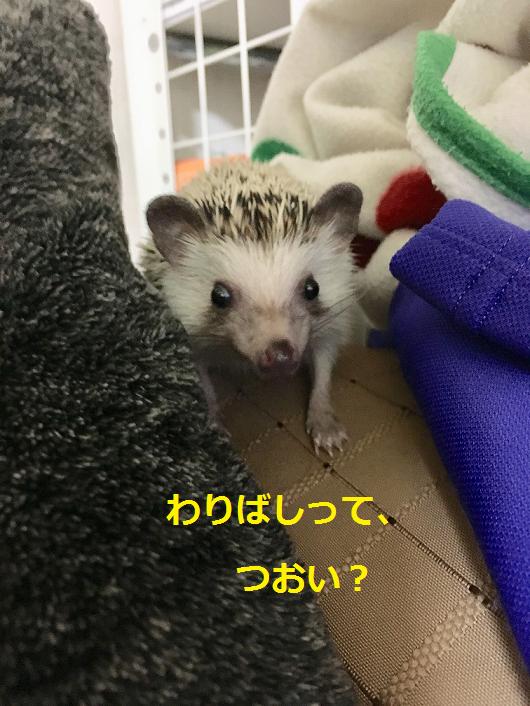 f:id:ogihara0308:20180412212444p:plain