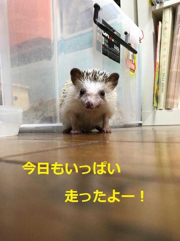 f:id:ogihara0308:20180418214552p:plain